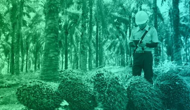 Asian Agri Using Technology To Improve Palm Oil Efficiency